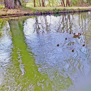 Seven Sisters and Seven Duckling / Pleiades meet Venus 2020
